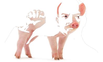 lenin-pig-logo3