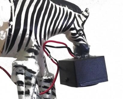 malware-zebra-mini